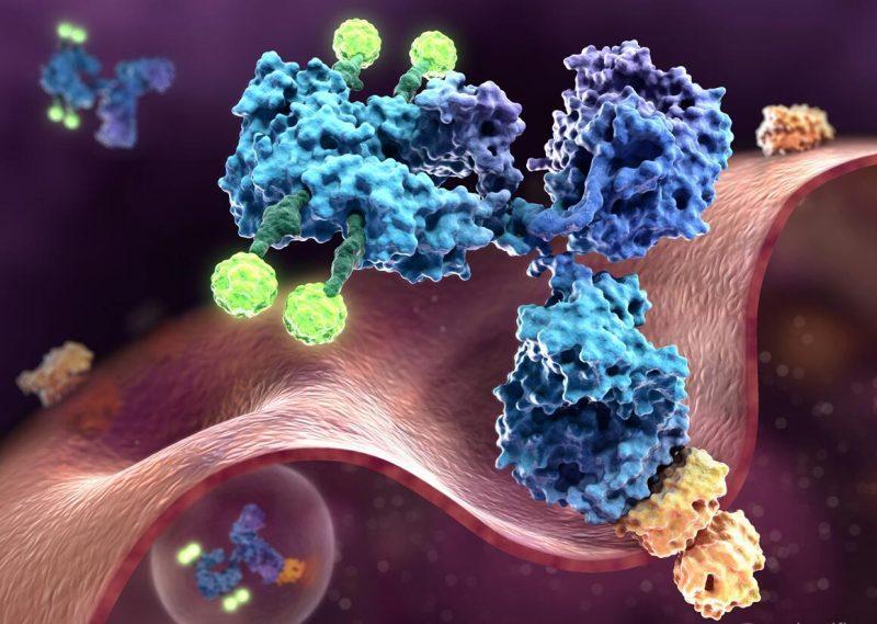 """Израел: Дори само една доза от ваксината """"Пфайзер/Бионтех"""" осигурява сериозно наличие на антитела"""