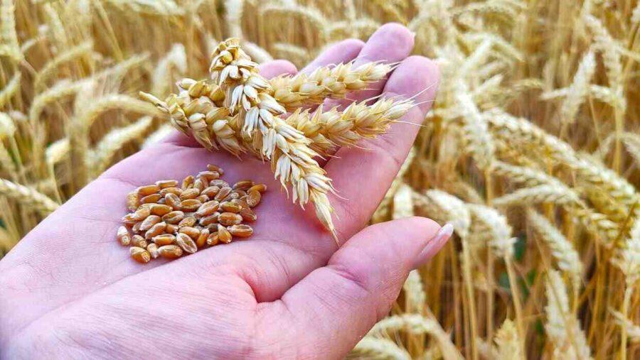 """Financial Times: Русия започва да сее семената на """"пшеничната дипломация"""""""